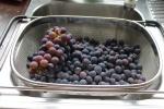 druifke per druifke van de trossen doen en wassen