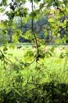 buiten de flora was er ook fauna, zoals hier